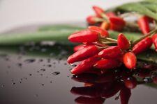 Ornamental Thai Pepper SPICY & TASTY 30 Seeds by Zellajake Buy 2 we Ship 3 #77