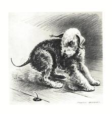 Bedlington Terrier - Morgan Dennis Dog Print - Matted
