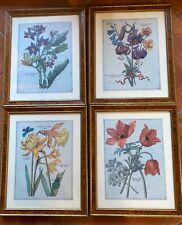 4 Botanical Prints Framed Soicher Marin Fine Art Narcissus Lily Solanicum Anemon