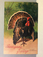 Thanksgiving Greetings Tom Turkey Feathers Fanned Antique Vtg Postcard Unposted