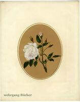 Ölgemälde: Rose, Öl auf Papier in Passepartout um 1870