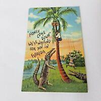 Tropical Florida Series Vintage Postcard C.T. Art Colortone Black Americana 287F