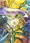 Rainforest Frog CALLA LILY Lynne French Artist Signed Print 8x11