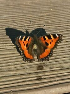Photo Picture Nature Butterfly