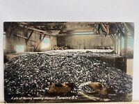 Vintage Postcard. 1909 Issued Pile Of Herring Awaiting Shipment Nanaimo BC PC101