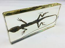 Real Lizard Specimens In Lucite Paperweight Education/Gift/Collection/Decoration