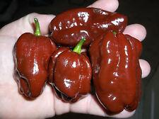 Organic Grown Chocolate Habanero Pepper seeds (25)