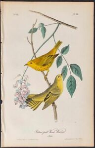 Audubon - Yellow-poll Wood-Warbler - hand colored 1840