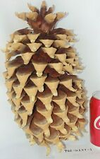 """HUGE XL Pine Cone 13.5""""! Coulter Christmas Crafts Rare WidowMaker HTF Untouched"""