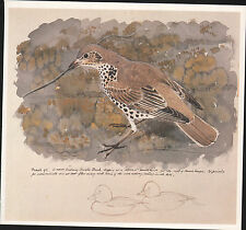 BEAUTIFUL VINTAGE BIRD PRINT ~ MISTLE THRUSH NEST BUILDING ~ TUNNICLIFFE