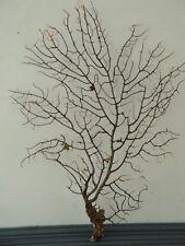 "6.7""x 9.2"" Black Gargonia Sea Fan Fish Tank Seashells Reef Coral"