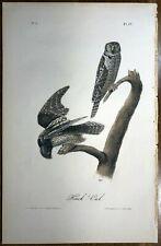 "Original  Audubon. Octavo 1st Ed Print ""HAWK OWL"" plate 27"