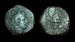 AE19 Seleukid Kingdom Tryphon (Macedonian helmet)