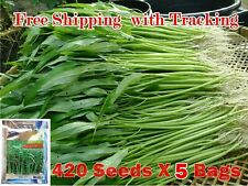 2100 seed Morning Glory Water Thai Tropical Vegetable Garden East Planting Cook