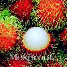 5pcs  Rambutan Seed Red Fruits Malaysia Miracle Fruit Seeds Plant Giant Plant Tr
