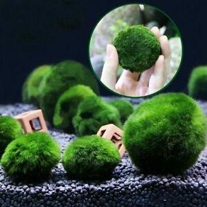 5X Green Giant Marimo Balls Cladophora Live Aquarium Plant Fish Aquarium Decor