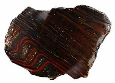 9.0 INS 6000 GRAMS STROMATOLITE  BANDED TIGER IRON SLICE  FOSSIL AUSTRALIA 5