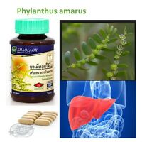 Phylanthus amarus Herb relieve Liver Health Hepatitis fatty liver jaundice Thai