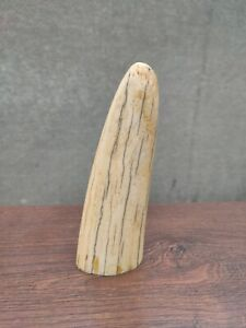 Scrimshaw Walrus Tusk  RESIN reproduction