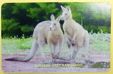SWAP CARD. EASTERN GREY KANGAROO. AUSTRALIAN WILDLIFE COLLECTION. BLANK BACK.NEW