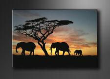 Cuadros en Lienzo + 120 x 80 cm Nr. 5066 los animales