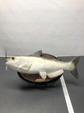 Bonelop Custom 2020 Cool Catfish The Football Star! • Singing Fish •