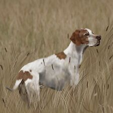"Print English Pointer 12""x12'"