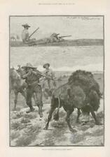 1886 antica stampa-Nord America Montana Buffalo CACCIA (216)