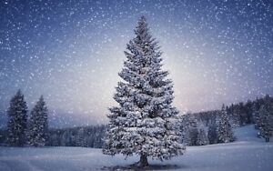 Christmas Tree Snowy Landscape Scene Winter Cold Canvas Picture Wall Art Prints