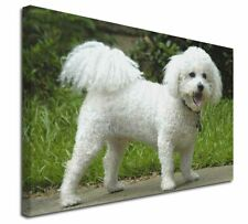 """Bichon Frise Dog 30""""x20"""" Wall Art Canvas, Extra Large Picture Prin, AD-BF2-C3020"""