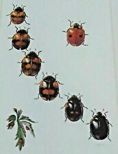 Objet scolaire planche poster old map art insecte N°57 Coccinelle à deux points