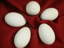"5 Large Fresh Blown Goose Eggs 8"" Pysansky Art One tiny 1/8"" hole White"