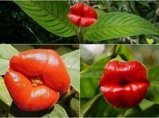 Flower pots planters Psychotria Elata Flower of Lips seeds like sexy, 50 seeds