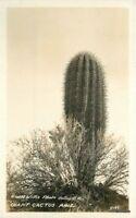 1920s Giant Cactus Arizona Willis RPPC real photo postcard 11199