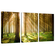 Set of Three Green Canvas Art Wall Pictures Trees Landscape Print 3042