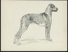 BRINDLE GREAT DANE STANDING LOVELY VINTAGE 1930'S DOG ART PRINT by KF BARKER