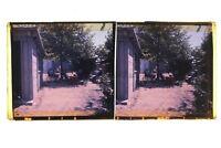 Francia Giardino Foto Amateur Francesi Stereo Placca Da Lente Positivo Vintage