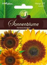 5466570 Sonnenblume Herbstschönheit  Mischung Helianthus annus   Blumen Samen