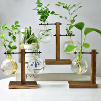 Tabletop Desk Decor Bulb Glass Hydroponic Vase Flower Plant Pot with Wooden Tray