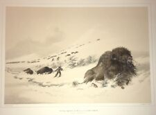 Dying Buffalo Bull In Snow,George Catlin,Native American Orig. Lithograph,Lim.Ed