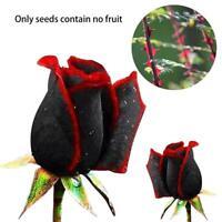 100 Stk Schöne Schwarze Rose Blume mit roten Rand Sämling Samen,de G6C1