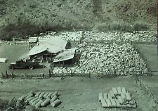Feeding Pens, Shearing Sheds, Bags of Wool, Washington,Magic Lantern Glass Slide
