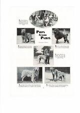 Vintage Pups Of Paris Bulldog Briard Poodle Wolfhound Pyreneean Saluki Ad Print