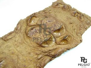 PELGIO Real Genuine Crocodile Hornback Back Strap Skin Leather Hide Pelt Brown