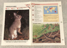 European Rabbit Wild Life Fact File Animal Card Home School Study Insert