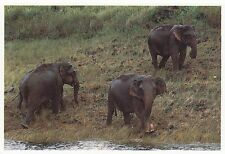 (82094) Postcard India Kerala Thekkady Elephants #1 - unposted
