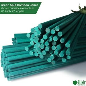 """Green Flower Stick   Bamboo Split Cane Plant Support   12"""", 24"""" & 36"""" Sizes"""