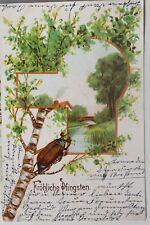 29928 Litho AK fröhliche Pfingsten Maikäfer Birke 1905