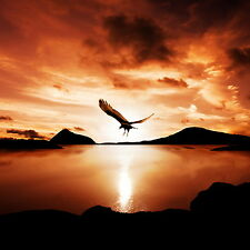 "Australian sunset eagle lake reflection art landscape print photo 24""x24"" poster"