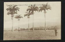 TRINIDAD & TOBAGO 04-Group of Palms on Quenn's Park, Savanna  (Real Photo (RPPC)